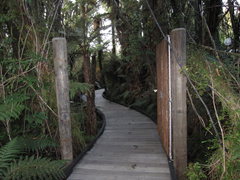 The path to our private pool at Glacier Hot Pools, Franz Josef.