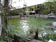 The natural setting helps to make a trip to Glacier Hot Pools very relaxing and enjoyable.