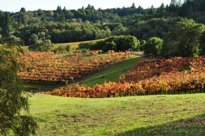 Grape vines add a splash of color to Sonoma County's Dry Creek Valley