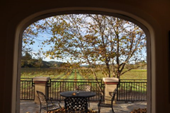 Looking out from Michel-Bernard's Dry Creek Valley's tasting room onto the terrace and the vineyards beyond.