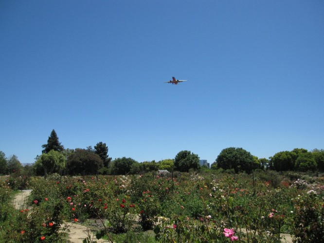 The Rose Garden is right in the flight path for the San Jose International Airport