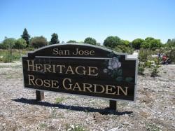 San Jose Heritage Rose Garden