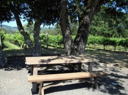 Picnic table with views of the vineyards at Loxton Winery
